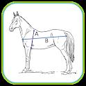 Viktberäkning Häst