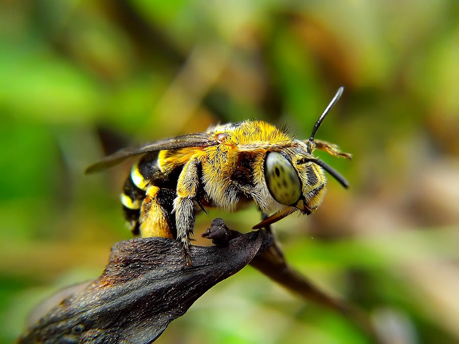 another green strips bee by Hendrata Yoga Surya - Instagram & Mobile Android