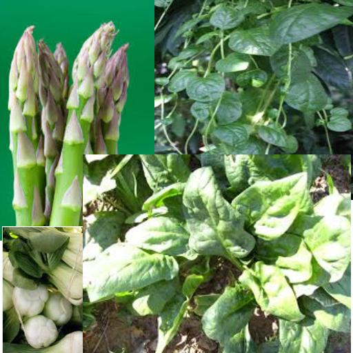 蔬菜营养成分