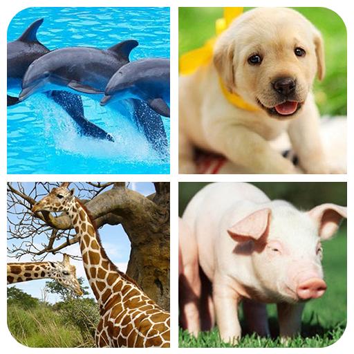 Animal Memory Game 休閒 App LOGO-APP試玩