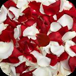 Rose petals Live Wallpaper