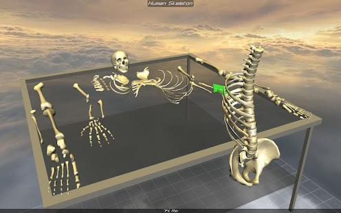 Body Disassembly 3D - screenshot thumbnail