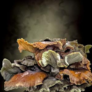 gljive16101pix.jpg