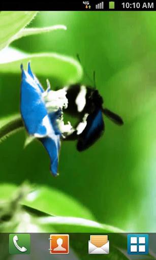 【免費個人化App】Butterfly Live Wallpaper-APP點子