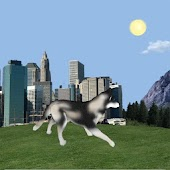 Dog Husky Traveling 3D LWP
