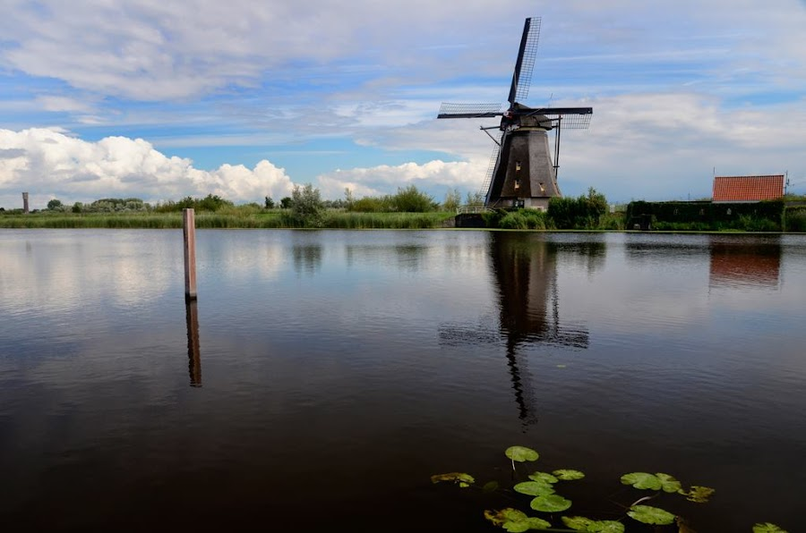 Kinderdike, Netherlands by Andrew Tolsma - Landscapes Waterscapes ( clouds, water, water lilly leaves reflection, windmill,  )
