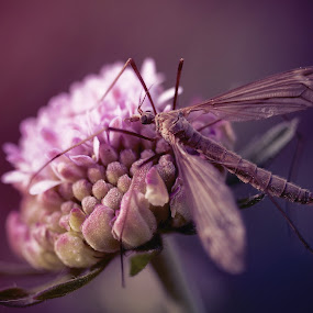 Beauty and The Beast by William Holley - Animals Insects & Spiders ( nature, insect, digital, photography, flower )