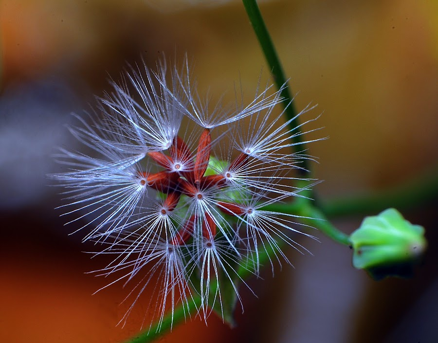 by Muiz Junior - Nature Up Close Other plants