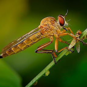breakfast by Rhonny Dayusasono - Animals Insects & Spiders