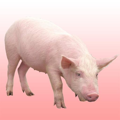 猪的声音 音樂 App LOGO-APP試玩