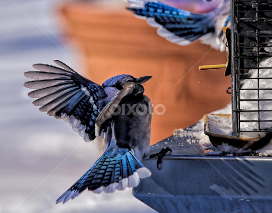 by Doreen Rutherford - Animals Birds ( birds,  )