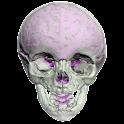 Cranio Intero icon
