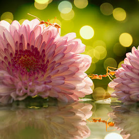 My reflection by Citra Hernadi - Flowers Flowers in the Wild (  )