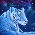 Bengal Tiger in the Snow Live icon