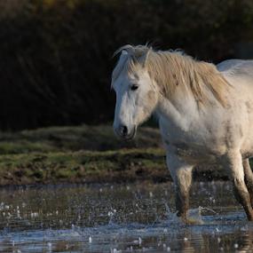 by Angelo Butera - Animals Horses