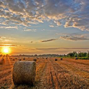 Sunrise by Zoran Rudec - Landscapes Prairies, Meadows & Fields ( field, sunrise )