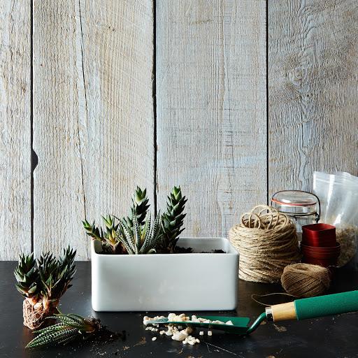 DIY Cactus Garden Planter