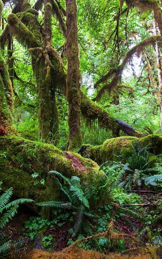丛林动态壁纸