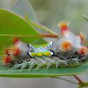 Spitfire caterpillar