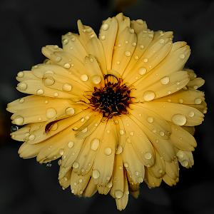 20140624-Nikon_14_049.jpg