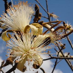 Flower in the sky by Kimmarie Martinez - Flowers Flower Gardens