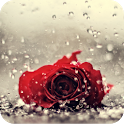 Rose in the rain icon