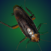 Pesky Roach Donation