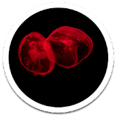 Glow Jellyfish Live Wallpaper