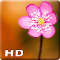 Macro Wallpaper HD icon