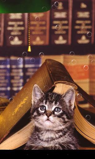 虎斑貓咪動態桌布