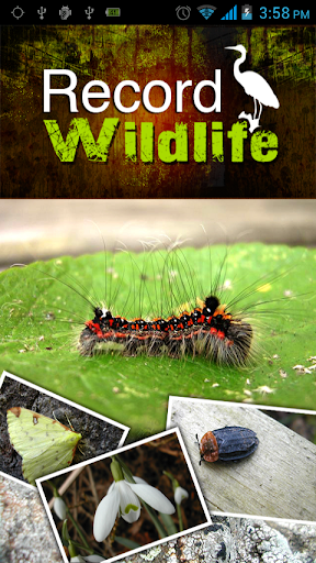 Record Wildlife