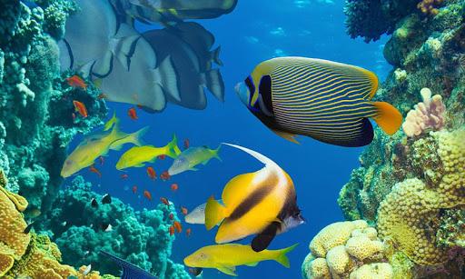 海洋世界魚類拼圖