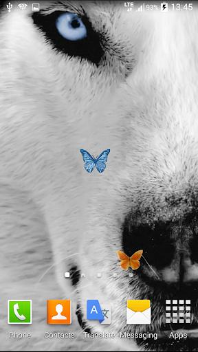 狼動畫壁紙
