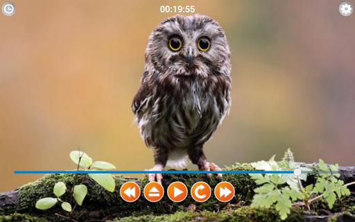 玩音樂App|鳥呼叫的聲音免費|APP試玩