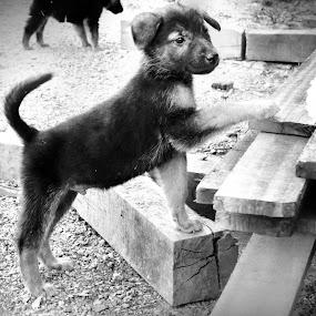 Catch  by Lê Thị Thanh  Tâm - Animals - Dogs Playing