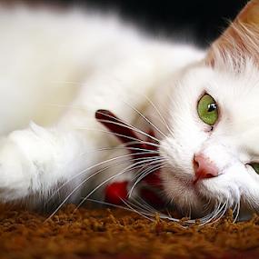 miaw by Dodi Yoga - Animals - Cats Portraits ( deemozart )