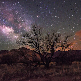 Sonoran Summertime Sky by Ed Mullins - Landscapes Starscapes ( milkyway, sky, tree, silhouette, stars, dead tree, milky way,  )