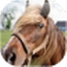 Cool Horse Wallpapers icon