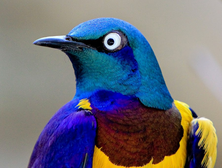 Nature' color palate by Brent Morris - Animals Birds (  )