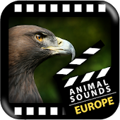 Best European Animals Sounds