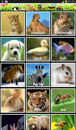 赤ちゃんは動物と英語を学ぶ
