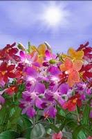 Screenshot of Orchids Live Wallpaper