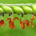 Grass flower and seeds