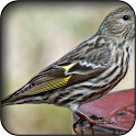 Siskin Wallpapers icon