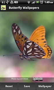 Butterfly Wallpapers - screenshot thumbnail