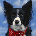 Border Collie Dog Wallpapers logo