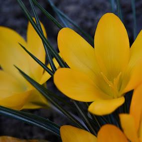 by Metka Majcen - Flowers Flower Gardens (  )