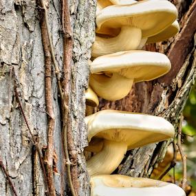 Four Mushrooms by Giancarlo Bisone - Nature Up Close Mushrooms & Fungi ( mushroom, tree, fall, brown, new jersey, nature, natural )