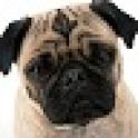 Pug Puzzle game logo
