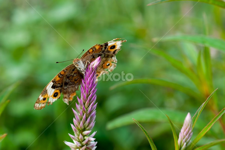 Cute Butterfly by Husni Mubarok - Animals Insects & Spiders